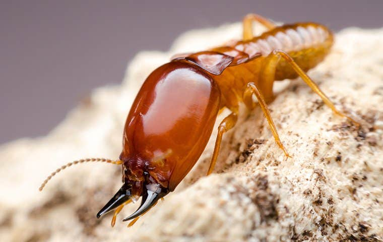 a big termite on wood material