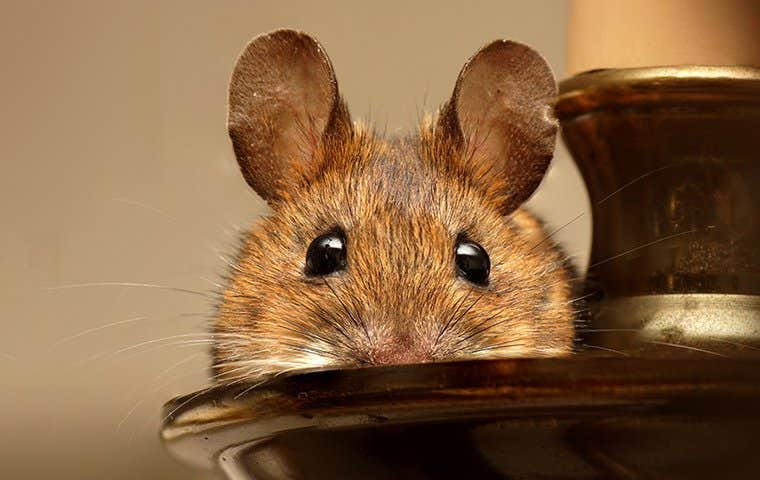 a rodent on a candle stick