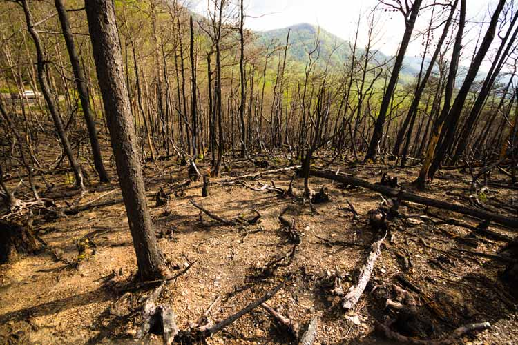 How to prevent forest fires - TN