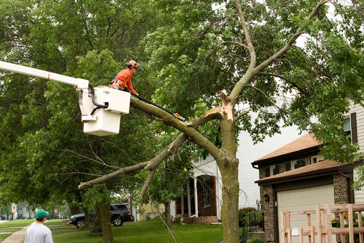 Does Homeowners Insurance Cover Tree Removal