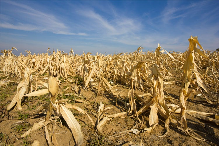 Does Crop Insurance Cover Drought in Kentucky