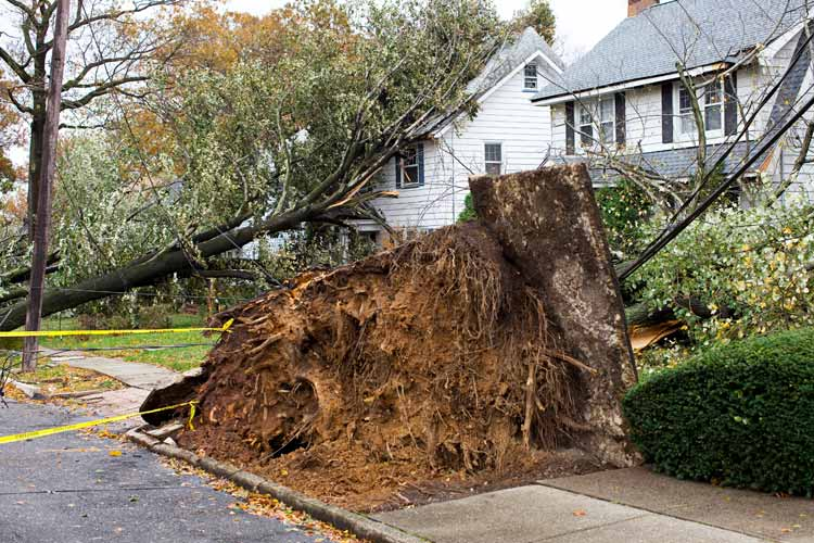 Does Homeowners Insurance pay for tree removal in Florida