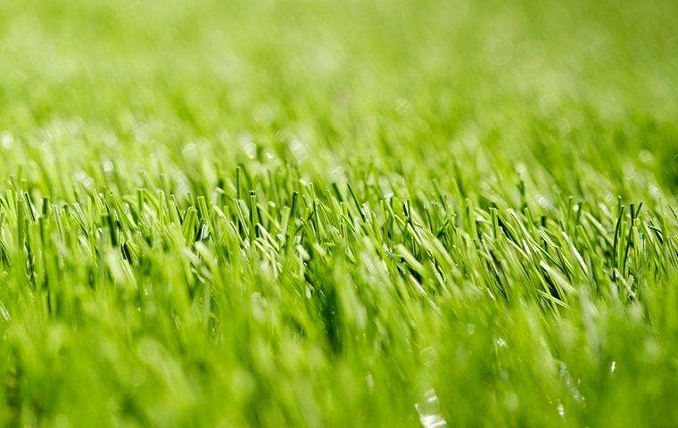 Blades of grass in lawn near Dallas, TX