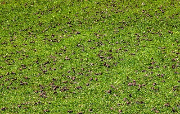 Green lawn core aeration in Dallas, TX