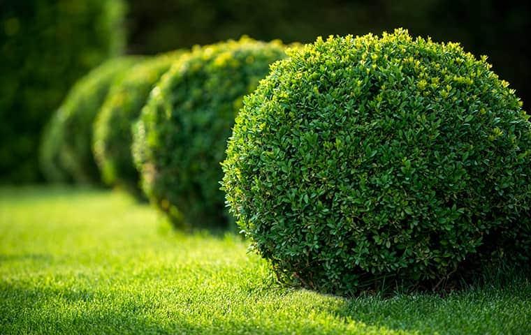 shrubs outside a house