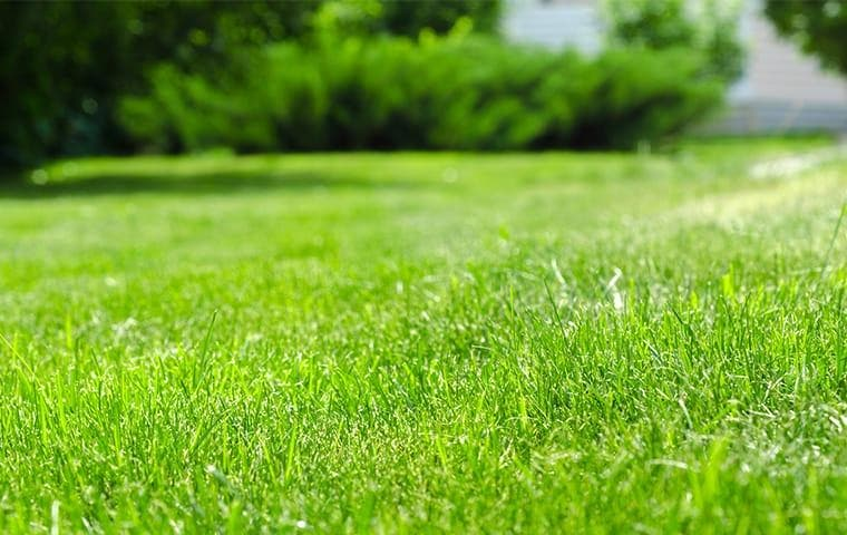 Fertilized green lawn in Frisco, TX