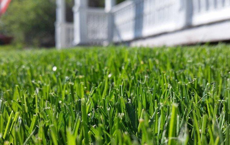 Close up of a lawn near Dallas, TX
