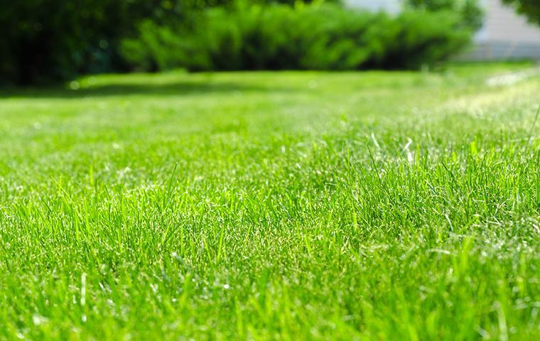 Fertilized lawn near Dallas, TX
