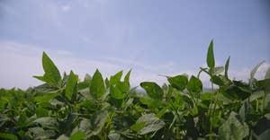 Optionen, um das Lebensmittelsystem innerhalb der Umweltgrenzen zu halten