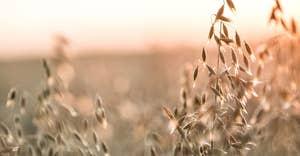 Alpro setzt auf Pflanzenkraft aus Hafer