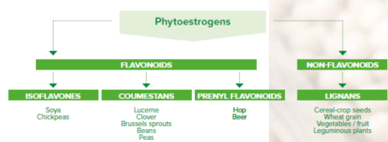 Graph about phytoestrogens