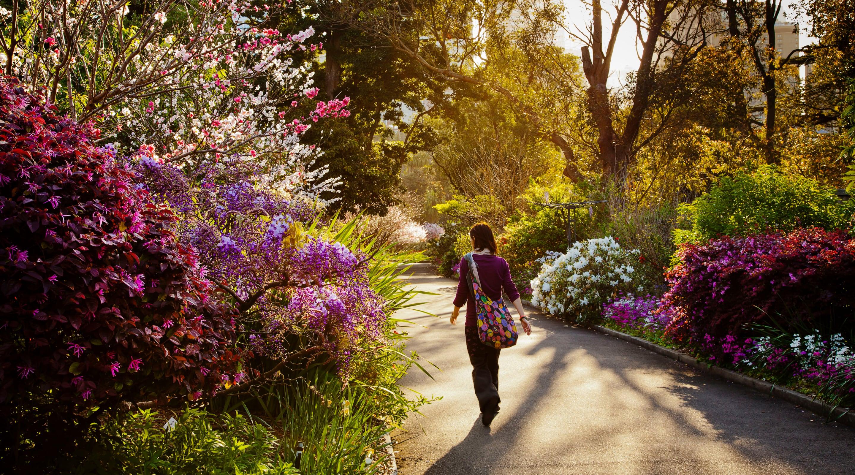 Royal Botanic Garden Website