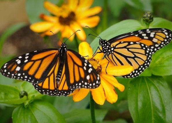 BlueModus Donates to Butterfly Pavilion
