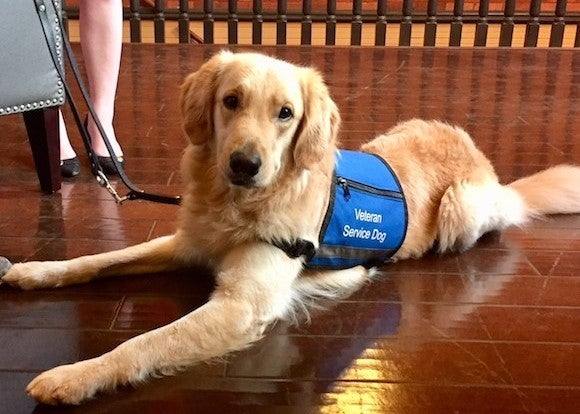 BlueModus Donates to Southeastern Guide Dogs