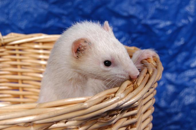 BlueModus Donates to Navarre Ferret Rescue