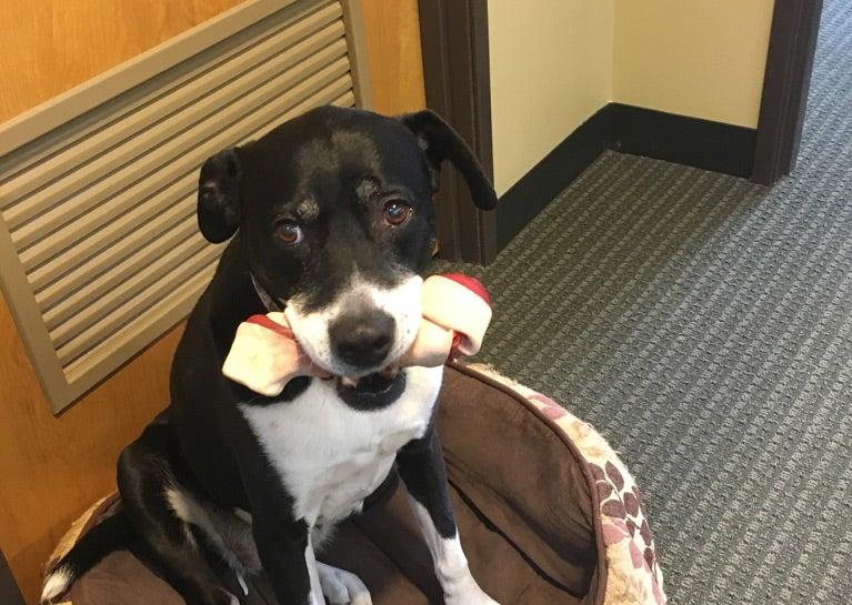 Meet Lillie, Corporate Dog