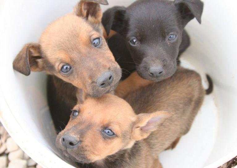 BlueModus donates to Soul Dog