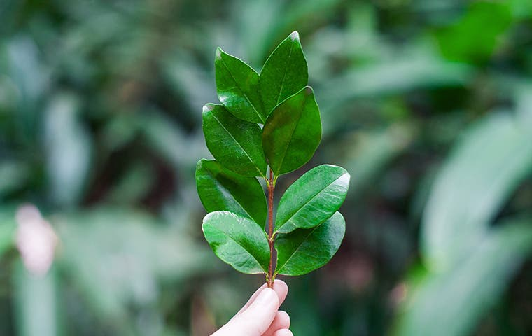 person holding a leaf in tucson arizona
