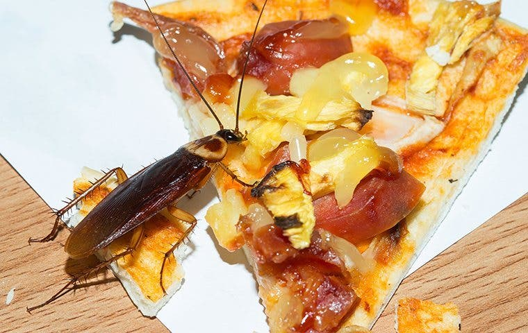 a cockroach crawling on pizza
