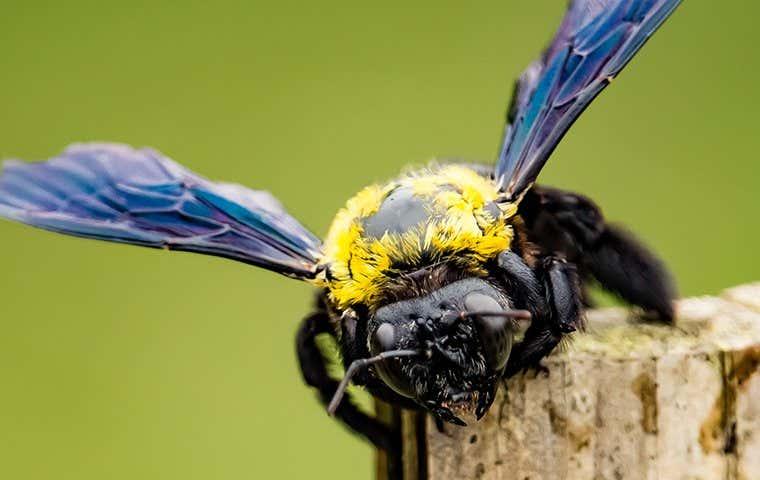 a bee on wood in tucson arizona