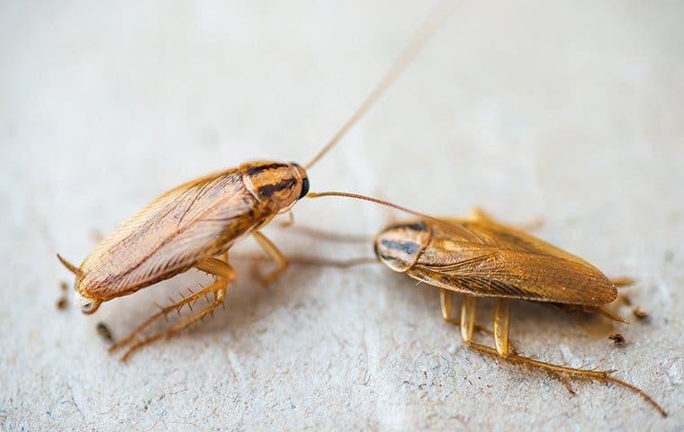 cockroaches crawling on floor in tucson arizona