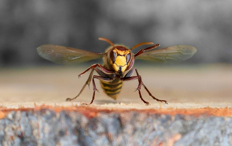 close up of a wasp on a porch in tucson