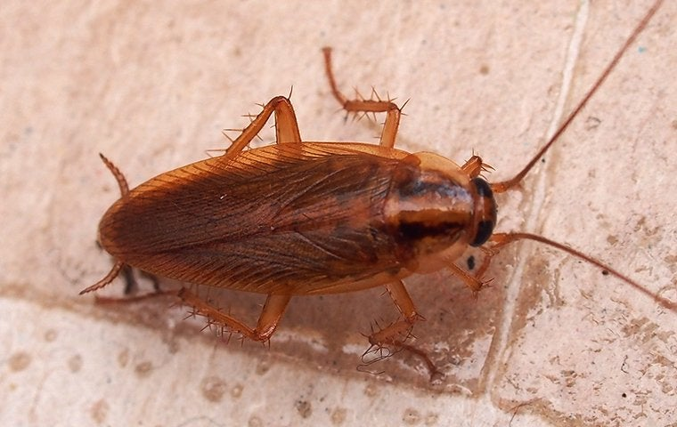 a cockroach in a kitchen in tucson arizona