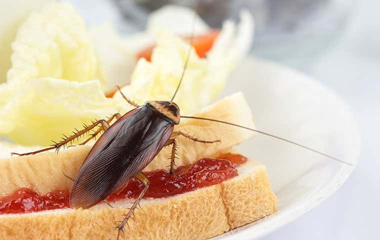 cockroach on a sandwich in tucson arizona