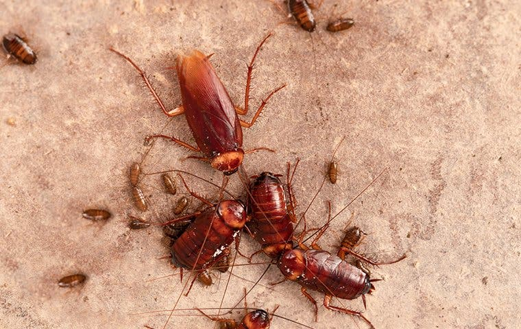 cockroaches on a kitchen floor