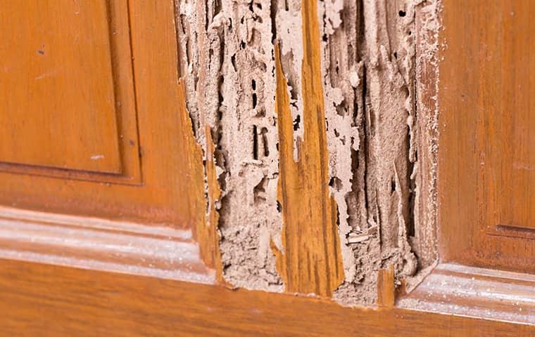 wood damaged by termites in tucson arizona