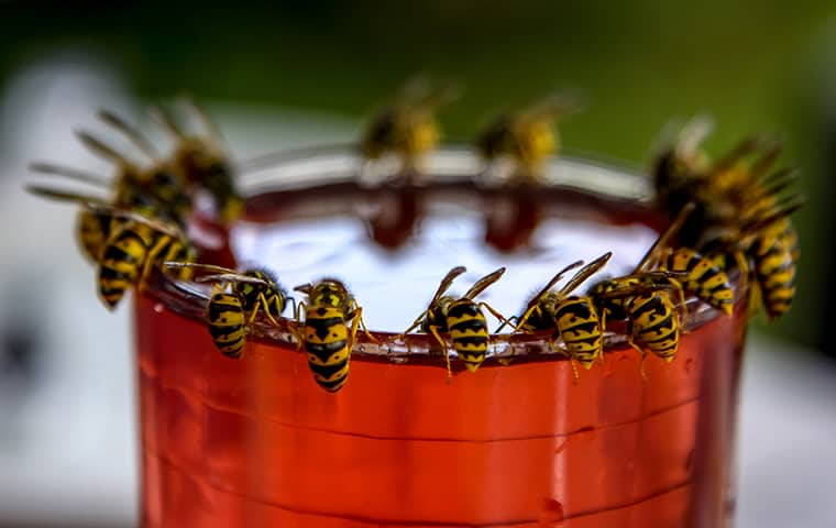 wasps on a cup outside