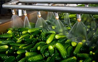cucumbers in a food processing plant