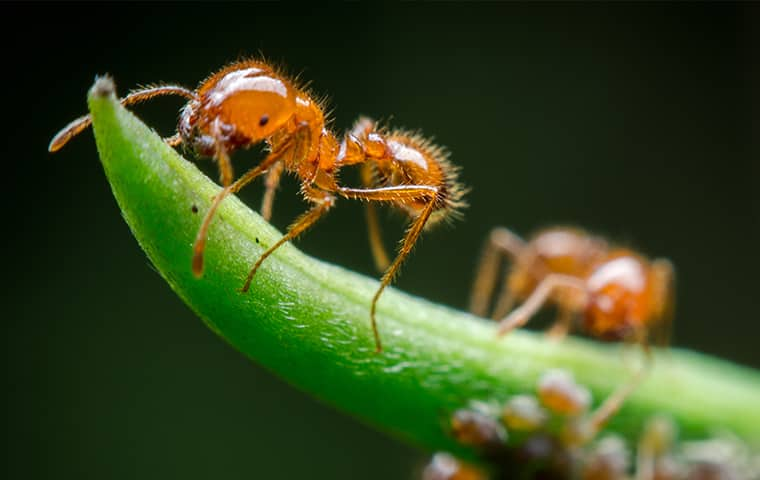 fire ants on a green plant