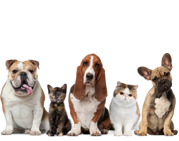 Advanced Dental Super Special Small Bags - $10 off Large Bags 13kg - $25 off  Greenies 1kg Dog $15 off Greenies 340g Dog $3.95 off