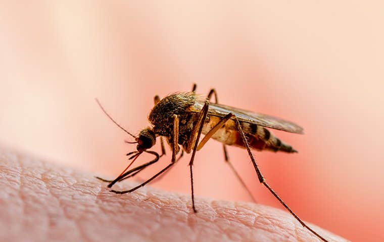 mosquito on skin in edisto south carolina