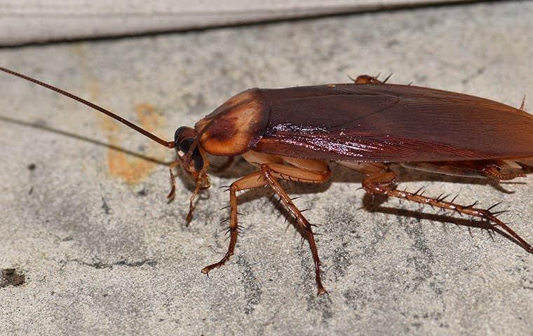 a cockroach in edisto south carolina