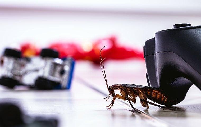an american cockroach on a living room floor