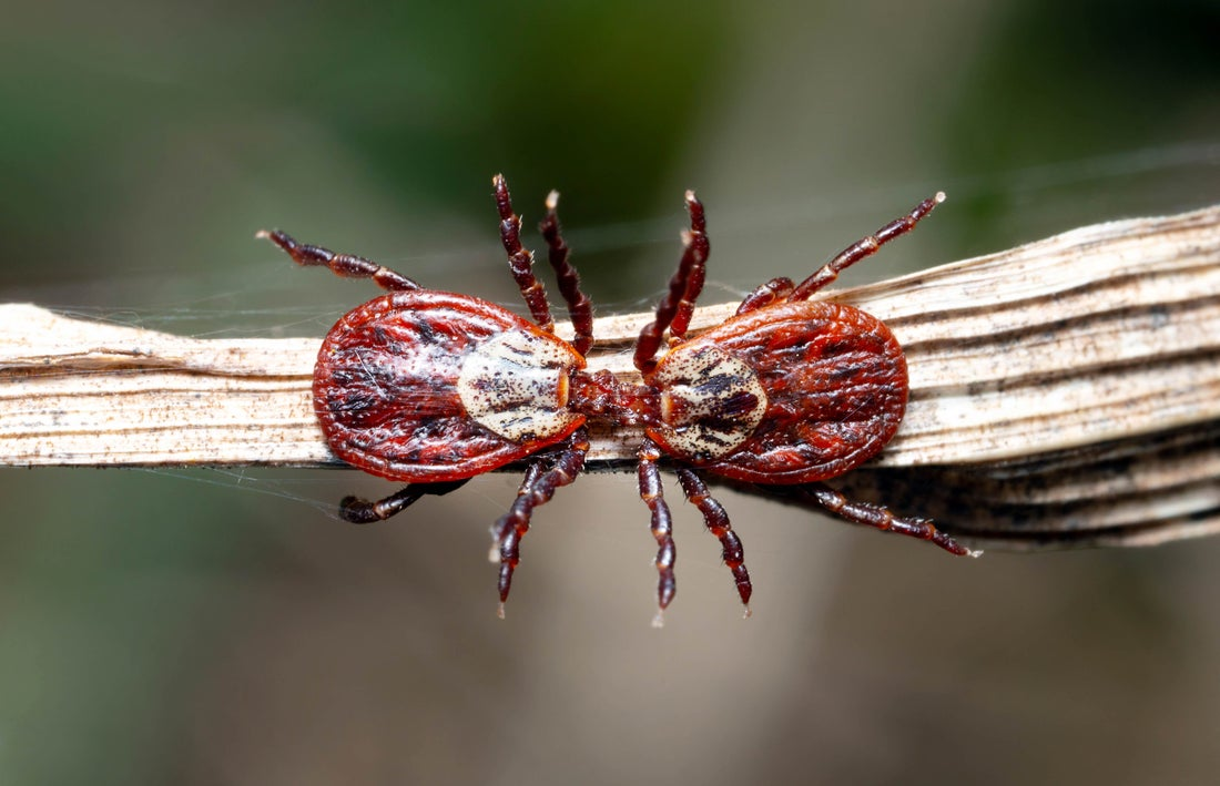 Protect Yourself Against Lyme Disease
