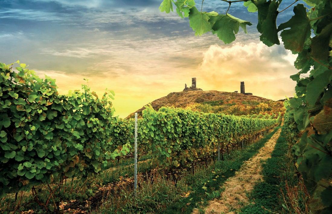 Zámecké vinařství Třebívlice: Elegantní vína ze severu