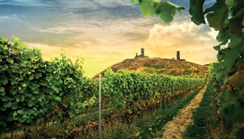 Chateau Winery Třebívlice: Elegant wines from the north