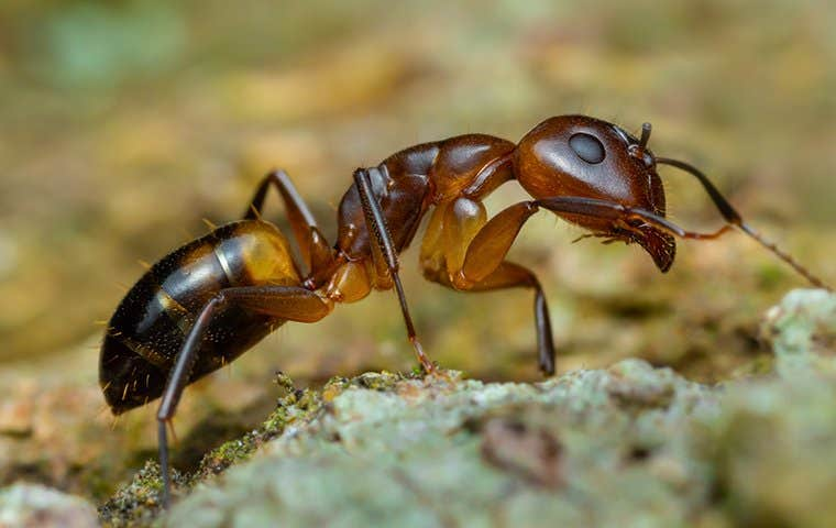 an ant up close on the ground