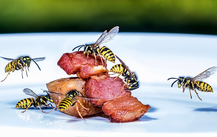 ants on meat