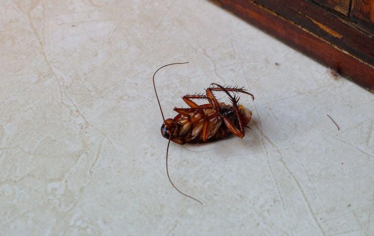 a cockroach on the floor