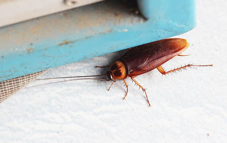 a cockroach on a window sill