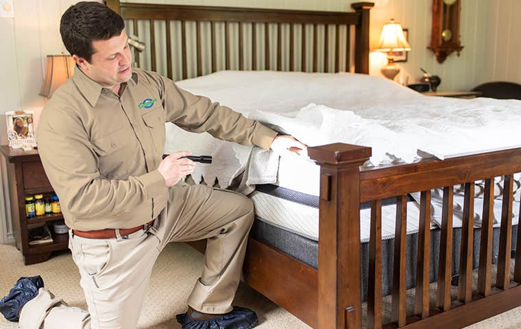 bed bug inspection in a bed room