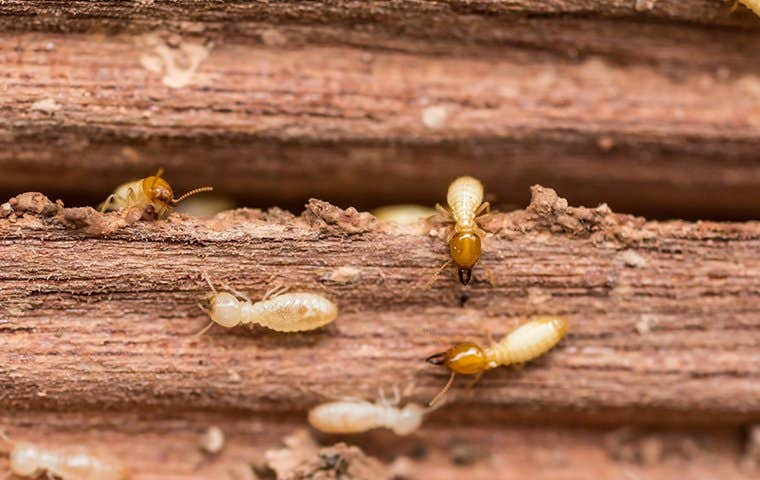 a termite swarm on a piece of wood