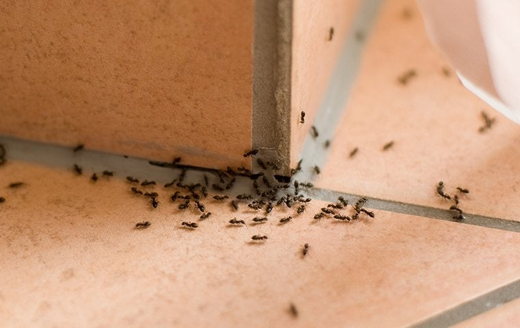 ants on sink