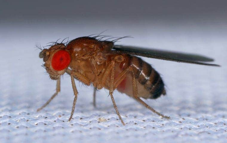 a fly on a screen with big red eyes