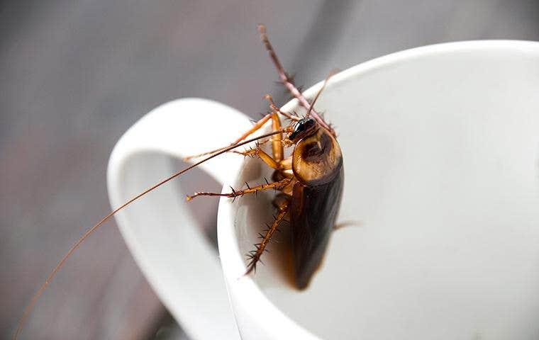 cockroach on the inside of a coffee mug