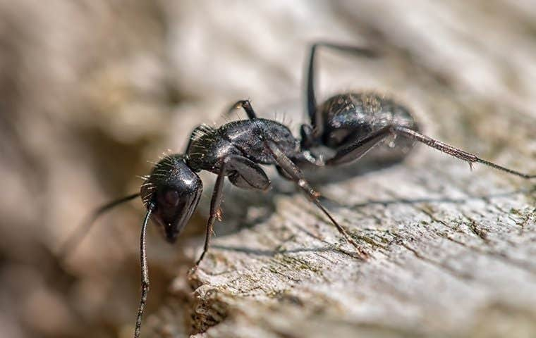 black ant on gray rock